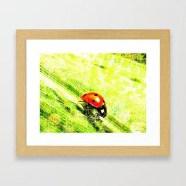 Coccinelle - version light Framed Art Print