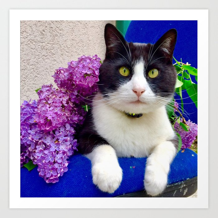 Orazio charming cat in the blue Art Print