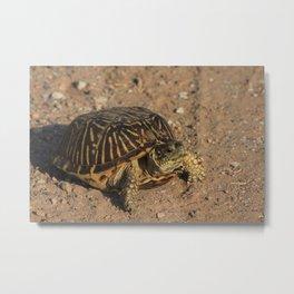 Kansas  Box Shell Turtle closeup Metal Print