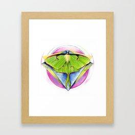 Actias luna - Luna Moth Framed Art Print