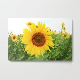 Sonnenblumen 3 Metal Print