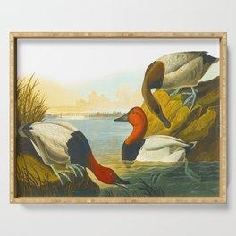Canvas Back Duck John James Audubon Vintage Scientific Birds Of America Illustration Serving Tray