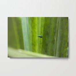 Peekaboo! A gecko in the agave Metal Print