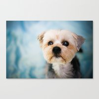 puppy Canvas Prints featuring Puppy by Jennifer Renner