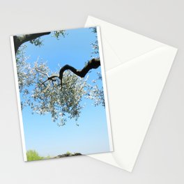 French Riviera Olive Tree Stationery Cards