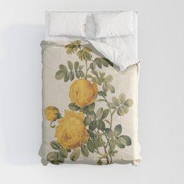 Yellow Rose Antique Botanical Illustration Comforters