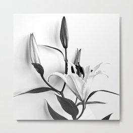 Lilium Metal Print