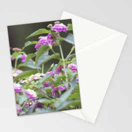 Longwood Gardens Autumn Series 144 Stationery Cards