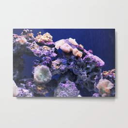 Under the Sea Puget Sound Metal Print