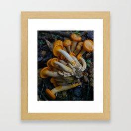 Jack-O-Lantern Mushrooms Framed Art Print