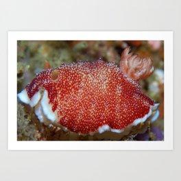 Munching red nudibranch Art Print