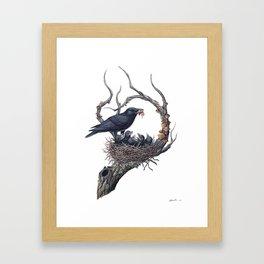 American Crow Framed Art Print