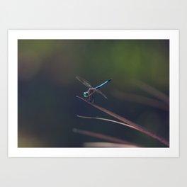 Dragonfly_08 Art Print