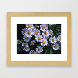 Plant Patterns - 𝘌𝘳𝘪𝘨𝘦𝘳𝘰𝘯 sp. Framed Art Print