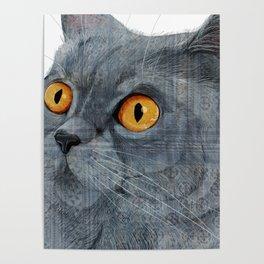 Blue British Shorthair cat Poster