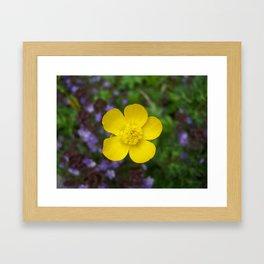 hello buttercup Framed Art Print
