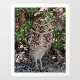 Owl ya doing? Art Print