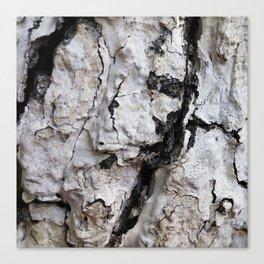 bark abstact no4 Canvas Print