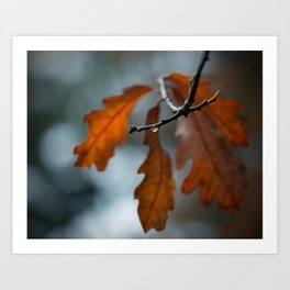 Rust Orange Oak Leaves in the Rain Art Print