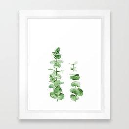 Eucalyptus leaves. Framed Art Print
