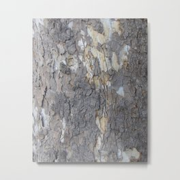 brown sycamore bark Metal Print