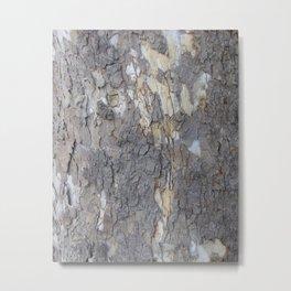 brown sycamore bark Metal Print