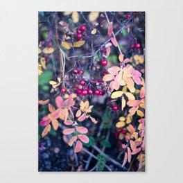 Forbidden 2 Canvas Print