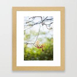 Maple Puff Framed Art Print