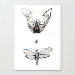 Cat & Moth Canvas Print