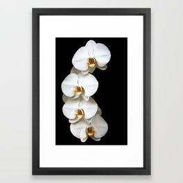 Orchid-1 Framed Art Print