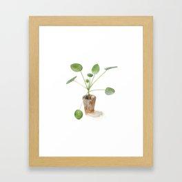 Pilea. Chinese money plant. Framed Art Print