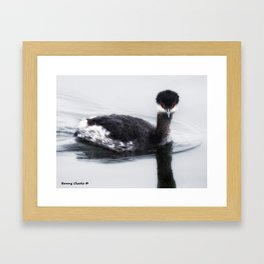 Eared Grebe Framed Art Print