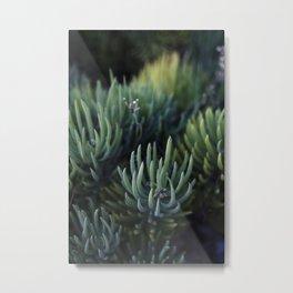 Ombre Succulents Metal Print