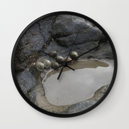Limpets on the Edge of a Rockpool Wall Clock