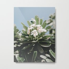 Vibrant White Flower Bunch Leafy Green Planet Clear Blue Sunny Sky Metal Print