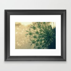 Queen anne's lace 01 Framed Art Print