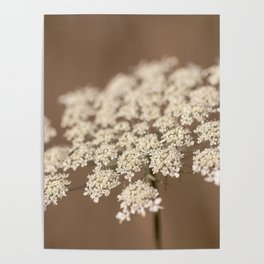 Delicate Lace Poster