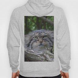 Wild Cat Hoody