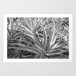 Dyckia in black and white Art Print