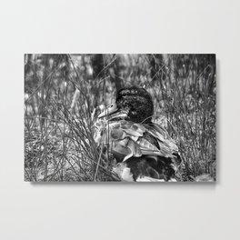 Into the Wilderness - Black & White Metal Print