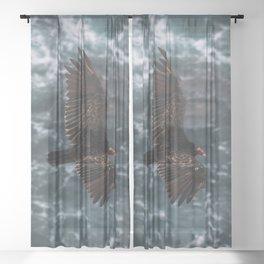 Turkey Vulture Wall Art | California Wildlife Nature Ocean Beach Coastal Travel Photography Print Sheer Curtain