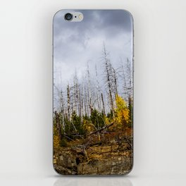 Bare Trees iPhone Skin