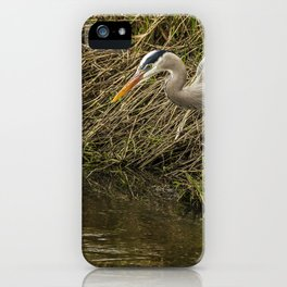 Great Blue Heron By the Water's Edge iPhone Case