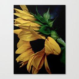 Mellow Yellow II Canvas Print