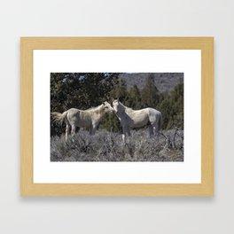 Wild Horses with Playful Spirits No 1 Framed Art Print