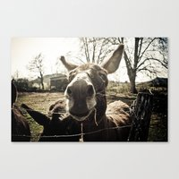 donkey Canvas Prints featuring Donkey by monsieur m