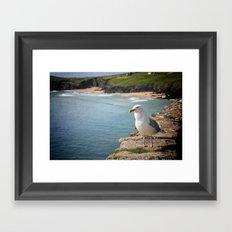 Sea-gull Framed Art Print