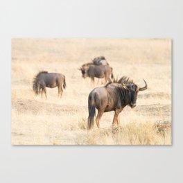 Group of wildebeest Canvas Print
