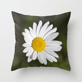 Shasta Daisy 3 Throw Pillow