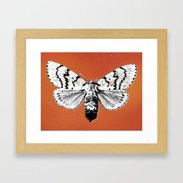 Invasive Species Series: Female Gyp. Moth Framed Art Print